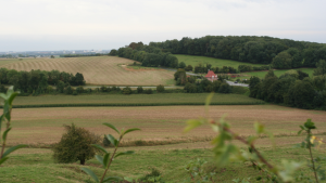 Beaufort countryside 2