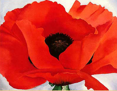 poppies | A Writer of History