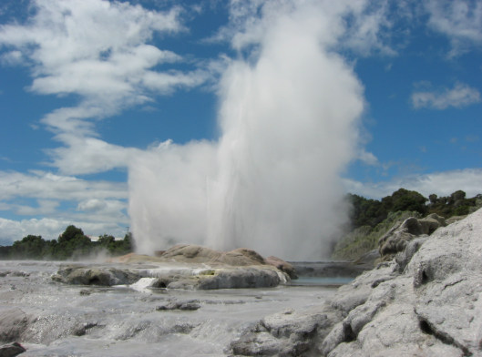 North island geyser